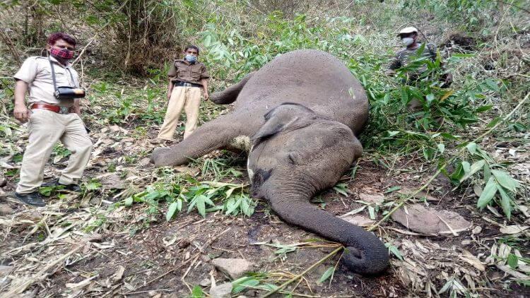 ہاتھیوں کی ہلاکت