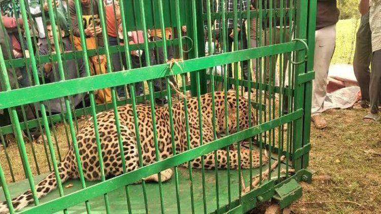 پنجرے میں قید