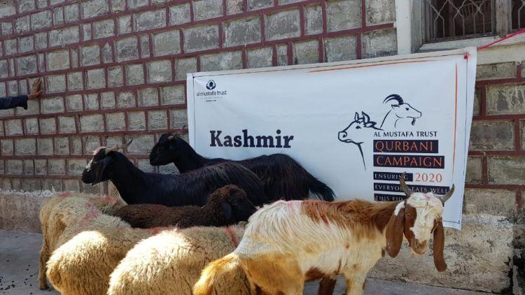 بڑے جانوروں کی قربانی پر پابندی