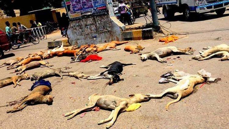کراچی کی سڑک پر بکھری کتوں کی لاشیں