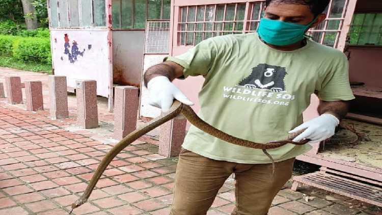 سانپ کوپکڑے ہوئے ایک شخص